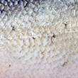Texture of fish skin without scales - Stock Photo