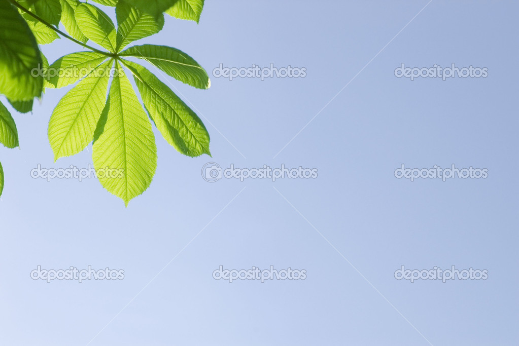 Green leaves on blue sky background — Stock Photo #1873726
