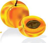 Frutas duraznos maduros — Vector de stock