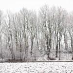 冬季景观 — 图库照片 #1842260