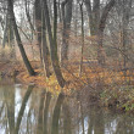 Woodland and Stream — Stock Photo #1842309