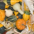 Gourds and Corn — Stock Photo #1844100