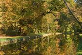 Foliage With Stream — Stock Photo