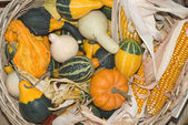 Gourds and Corn — Stock Photo