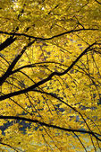 Vista Outono de folhagem colorida — Fotografia Stock