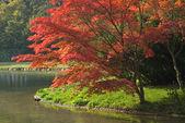 Colorful Foliage — Stock Photo