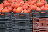 Red Gourds — Stock Photo