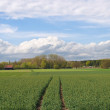 Stock Photo: Spring Farming In Germany