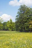 Dzikich kwiatów — Zdjęcie stockowe