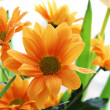Bunch of orange chrysanthemum — Stock Photo #1853824