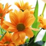 Bunch of orange chrysanthemum — Stock Photo