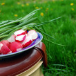 Reddish and green onion, food basket on nature — Photo