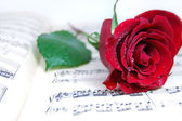 Red rose on music sheet — Stock Photo