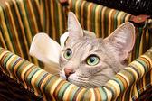 黑烟猫看好奇 — 图库照片