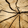 Brown circular cross section of tree — Stock Photo #1912043