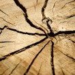 Stockfoto: Brown circular cross section of tree