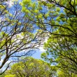 Stock Photo: Fresh green branches