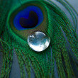 Peacock feather with glass stone — Stock Photo
