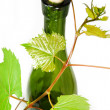 Wine bottle with young grape vine branch — Photo #1919764