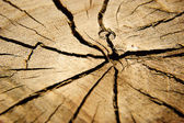 Brown circular cross section of tree — Stock Photo