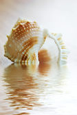 Seashell in water — Stock Photo