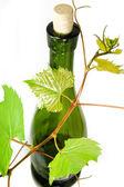 与年轻的葡萄树分支的葡萄酒瓶 — 图库照片