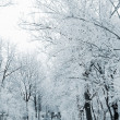 Stockfoto: Winter alley