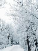 Callejón de invierno — Foto de Stock