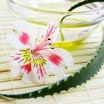 Aloe vera leaf and oil — Stock Photo