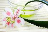 Aloe vera yaprağı ve petrol — Stok fotoğraf