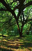 Subtropical wood, Abkhazia, Georgia — Stock Photo