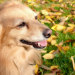 Dog in orchard — Stock Photo