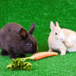 Stock Photo: Two rabbits on grass