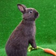 Funny rabbit and carrot — Stock Photo