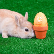 Stock Photo: Little rabbit