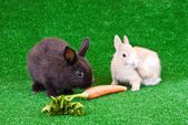 Two rabbits on grass — Stock Photo