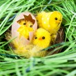 Easter chickens in nest — Stock Photo #2675097