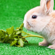 One little rabbit eating salad — Stock Photo