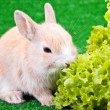 Cute little rabbit and salad — Stock Photo