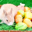Little rabbit and colorful easter eggs — Stock Photo