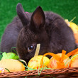 Stock Photo: Shy bunny and easter eggs