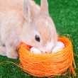Stock Photo: Cute domestic rabbit and easter eggs