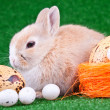 Stock Photo: Rabbit and eggs
