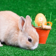 Sniffing bunny and easter eggs — Stock Photo