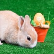 Stock Photo: Sniffing bunny and easter eggs