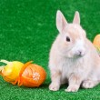 Easter decoration, rabbit and eggs - Stock Photo