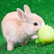 Stock Photo: Bunny sniffing easter egg