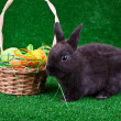 Easter eggs in nest and black rabbit — Stock Photo