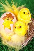 Påsk kycklingar — Stockfoto