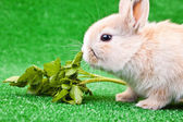 One little rabbit eating salad — Стоковое фото